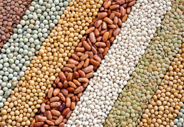 Białko roślinne – źródła białka w diecie wegańskiej i wegetariańskiej